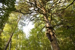 Bashkir forest