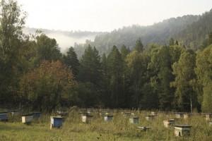 Bashkir apiary