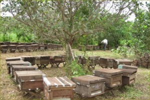 Vietnam honey_apiary